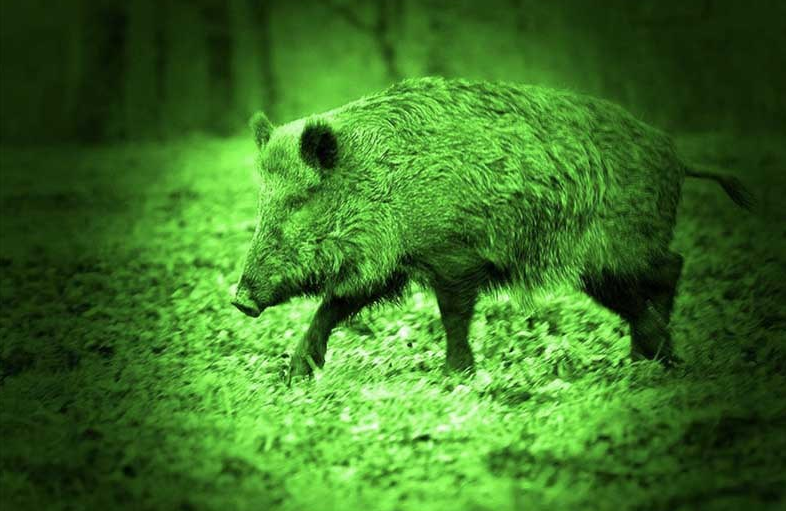 Greenlights for Hog Hunting